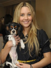 file_13_8401_celebs-who-look-like-their-dogs-amanda-bynes-12