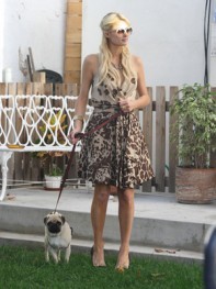 file_22_8401_celebs-who-look-like-their-dogs-paris-hilton-02